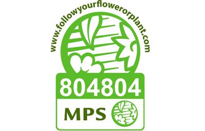 Vignet MPS-ABC EN-804804farbig_klein
